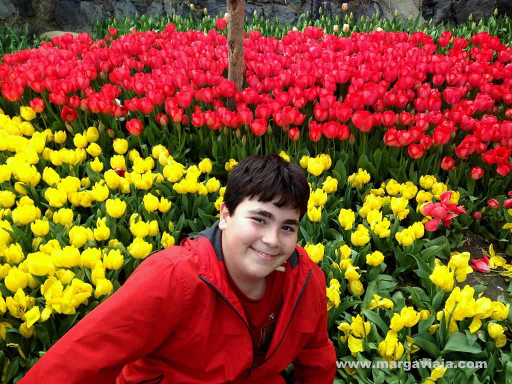 Tulipanes Estambul